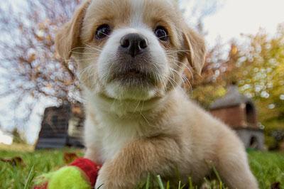 Die beliebtesten Tiernamen (Hund, Katze und Pferd)